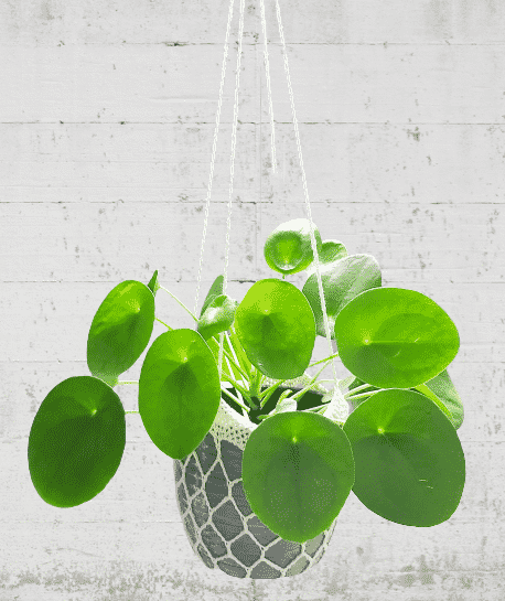 plantenhangercremekatoen